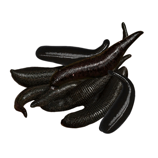 File:Leeches.png